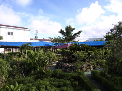沖縄長生薬草ハーブ農園